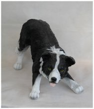 Border Collie spielend (7306)
