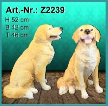 Golden Retriever sitzend